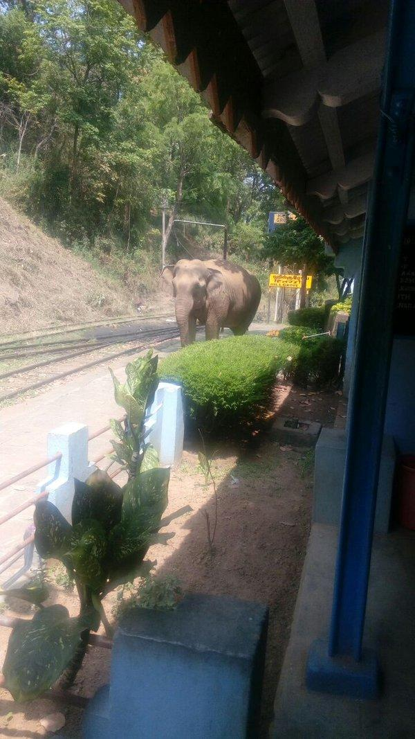 cg6cisvu0aa5p128082 - The Nilgiri mountain elephants